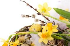 在巢的复活节彩蛋与水仙 免版税库存照片