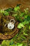 在巢的挂锁 免版税库存照片