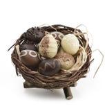 在巢的朱古力蛋 库存图片
