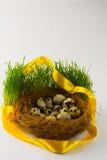 在巢的狂放的鸟鸡蛋 免版税库存照片