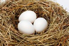 在巢的白色鸡鸡蛋 免版税库存照片