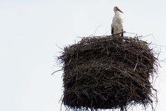 在巢的白色鹳在烟囱 免版税图库摄影