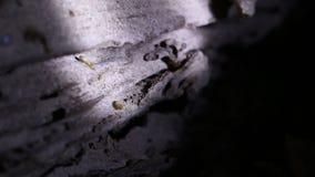 在巢的白蚁 股票视频