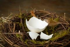 在巢的空的鸡蛋 库存图片