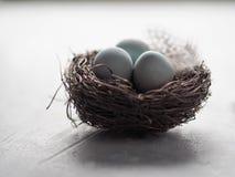 在巢的蓝色复活节彩蛋 免版税库存照片