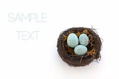 在巢的蓝色鸡蛋 免版税库存照片