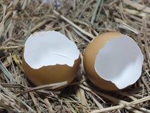 在巢的蛋壳 免版税库存图片