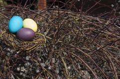 在巢的被洗染的鸡蛋在杨柳分支 免版税库存照片