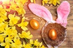 在巢的金黄鸡蛋,兔宝宝耳朵,反弹黄色水仙花 免版税库存图片