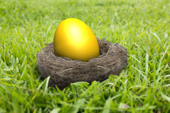在巢的金黄鸡蛋在草甸 库存图片