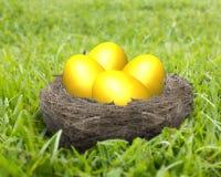 在巢的金黄鸡蛋在草甸 免版税库存照片
