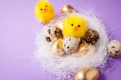 在巢的鸡在紫色背景,复活节 免版税库存照片