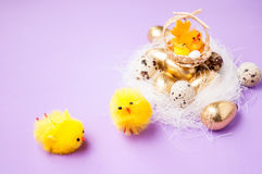在巢的鸡在紫色背景,复活节 库存照片