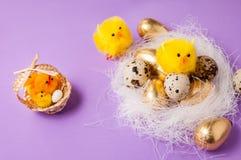 在巢的鸡在紫色背景,复活节 库存图片