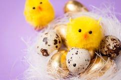 在巢的鸡在紫色背景,复活节 图库摄影