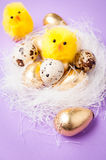 在巢的鸡在紫色背景,复活节 免版税图库摄影