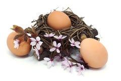 在巢的鸡蛋与开花 免版税库存照片