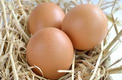 在巢的鸡蛋在养鸡场 免版税图库摄影