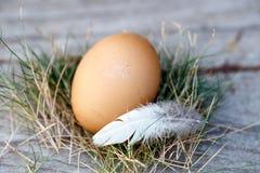 在巢的鸡鸡蛋 免版税库存照片