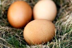 在巢的鸡鸡蛋 免版税库存图片