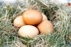 在巢的鸡鸡蛋 免版税图库摄影