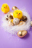 在巢的鸡 库存照片