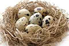 在巢的鹌鹑蛋从复活节特写镜头的秸杆 免版税库存图片