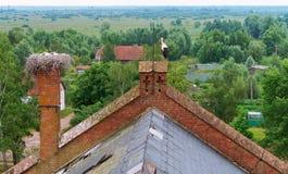 在巢的鹳在一个老房子,在一个红砖大厦的屋顶的鹳巢,与小小鸡的鹳在巢 免版税库存图片