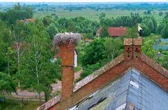 在巢的鹳在一个老房子,在一个红砖大厦的屋顶的鹳巢,与小小鸡的鹳在巢 免版税库存照片