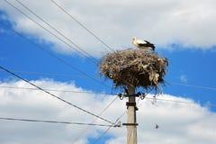 在巢的鹳在一根电杆 库存照片