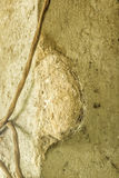 在巢的黄蜂在专栏 库存照片