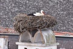 在巢,村庄铁锈的白色鹳在奥地利 库存照片
