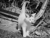 在工业设置& x28的小猫; 黑白& x29; 免版税库存图片