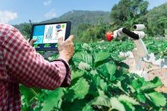 在工作的农业未来派机器人自动化的聪明的机器人农夫草莓 免版税库存照片