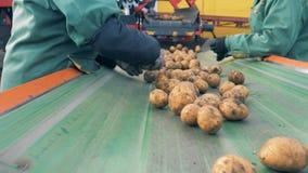 在工厂传动机的两个工作者排序土豆,关闭 影视素材