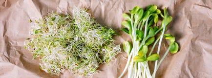 在工艺纸的混杂的有机微绿色 紫花苜蓿微绿色新芽新鲜的向日葵和堆  健康食物和 免版税库存图片