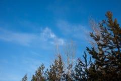 在左边和上面附近的嫩绿色槭树叶子在浅兰的天空下 它被采取了在初夏京都地区 叶子sti 免版税库存图片