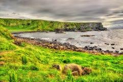 在巨人堤道附近的爱尔兰海岸线 免版税图库摄影