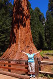 在巨型美国加州红杉树旁边的妇女 免版税库存图片