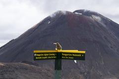 在巨大步行Tongariro高山横穿的黄色旅游路标标志 在背景活火山Mt死命, Mt Nguarahue 图库摄影