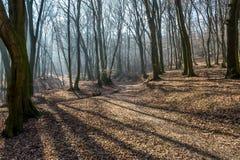 在巨大的低谷的冻小河在森林里在与雾、太阳射线和长的树阴影的2月下旬冬天 免版税库存照片