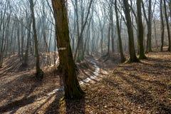 在巨大的低谷的冻小河在森林里在与雾、太阳射线和长的树阴影的2月下旬冬天 免版税库存图片