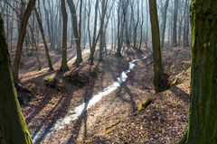 在巨大的低谷的冻小河在森林里在与雾、太阳射线和长的树阴影的2月下旬冬天 免版税图库摄影