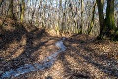 在巨大的低谷的冻小河在森林里在与雾、太阳射线和长的树阴影的2月下旬冬天 图库摄影