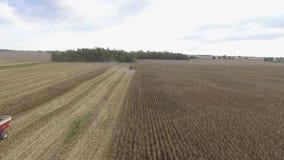 在巨大的有机麦子农田收获的美好的空中寄生虫4k全景视图与大组合卡车机器车 股票录像