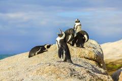 在巨石城海滩的企鹅 库存照片