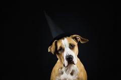 在巫婆万圣夜帽子的狗  免版税库存照片