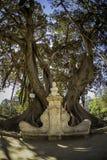 在巴伦西亚La Glorieta的榕属树 库存图片