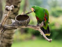 在巴厘岛动物园的一只绿色鹦鹉 免版税库存照片