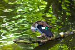 在巴厘岛,印度尼西亚湖的一只鸟  免版税库存照片